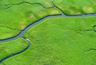 The Clean Water Rule Protects Wetlands